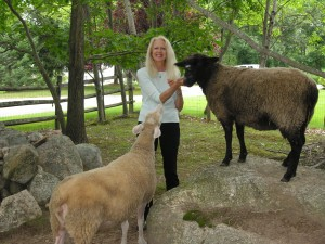 Cheryl A Major at home with 2 of her sheep
