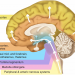 Do You Want to Prevent or Slow Parkinson's Disease