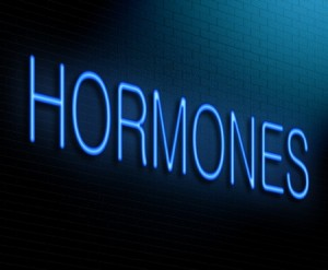 hunger hormones