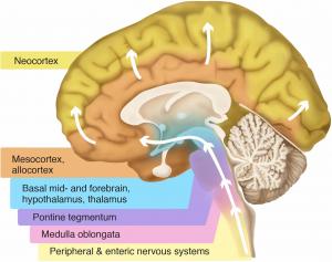 Prevent or Slow Parkinson's Disease